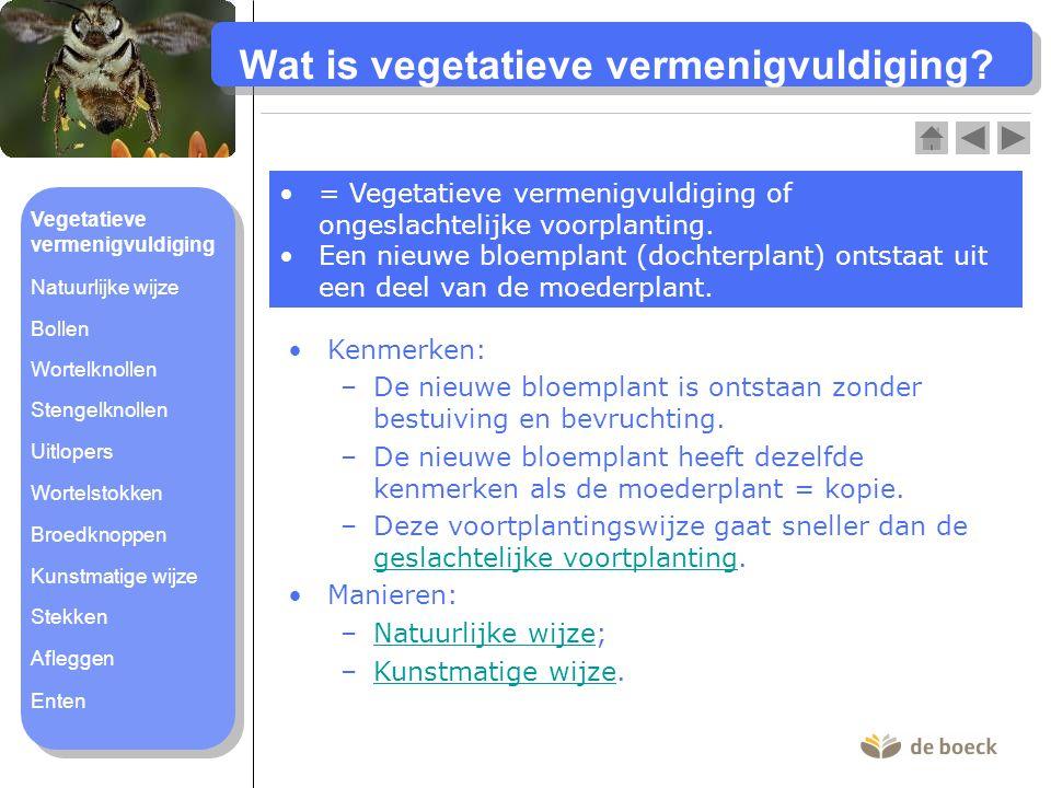Wat is vegetatieve vermenigvuldiging? = Vegetatieve vermenigvuldiging of ongeslachtelijke voorplanting. Een nieuwe bloemplant (dochterplant) ontstaat