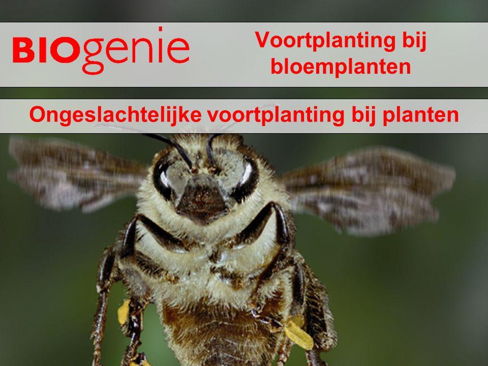 Voortplanting bij bloemplanten Ongeslachtelijke voortplanting bij planten