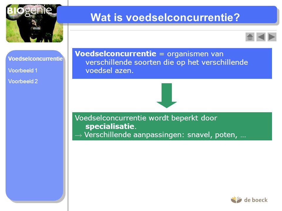 Wat is voedselconcurrentie? Voedselconcurrentie = organismen van verschillende soorten die op het verschillende voedsel azen. Voedselconcurrentie word
