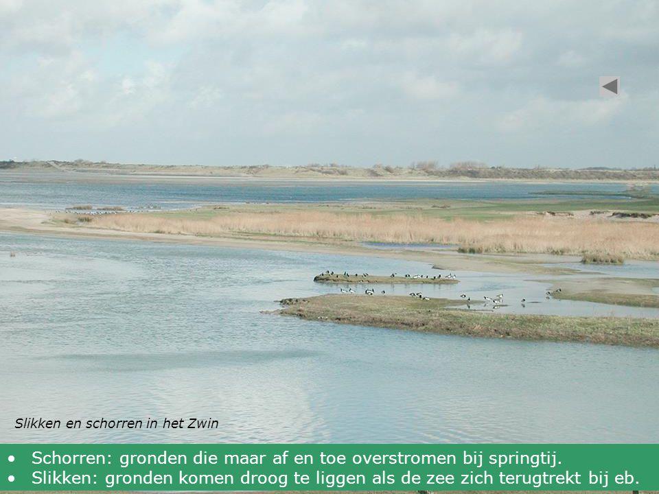 Slikken en schorren in het Zwin Schorren: gronden die maar af en toe overstromen bij springtij. Slikken: gronden komen droog te liggen als de zee zich