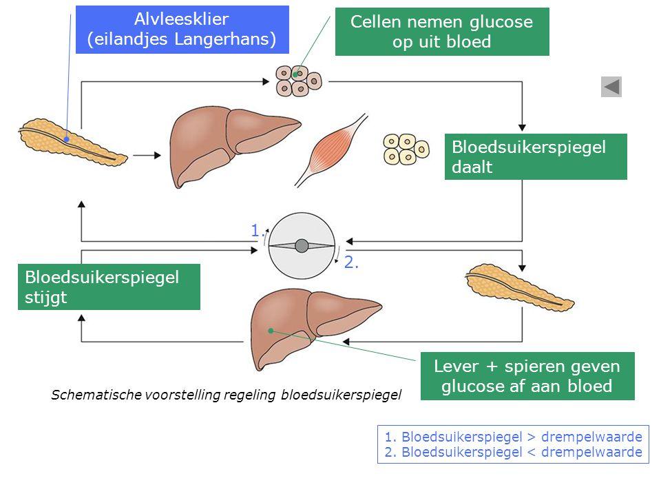 Glucosemeter bepaalt glucosegehalte in het bloed