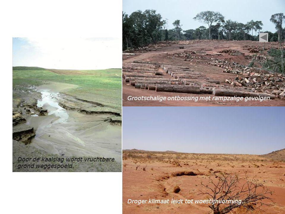 Droger klimaat leidt tot woestijnvorming. Door de kaalslag wordt vruchtbare grond weggespoeld. Grootschalige ontbossing met rampzalige gevolgen.