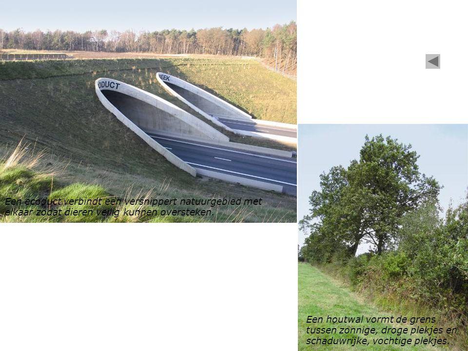 Een houtwal vormt de grens tussen zonnige, droge plekjes en schaduwrijke, vochtige plekjes. Een ecoduct verbindt een versnippert natuurgebied met elka