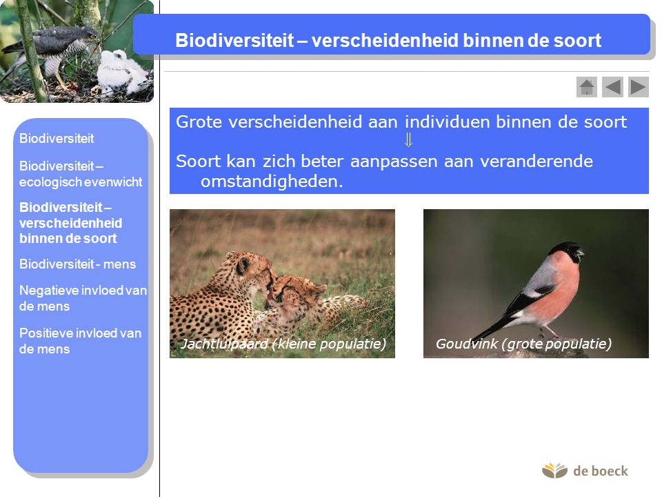 Biodiversiteit – verscheidenheid binnen de soort Grote verscheidenheid aan individuen binnen de soort  Soort kan zich beter aanpassen aan veranderend