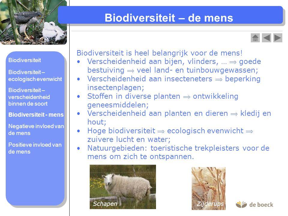 Biodiversiteit – de mens Biodiversiteit is heel belangrijk voor de mens! Verscheidenheid aan bijen, vlinders, …  goede bestuiving  veel land- en tui