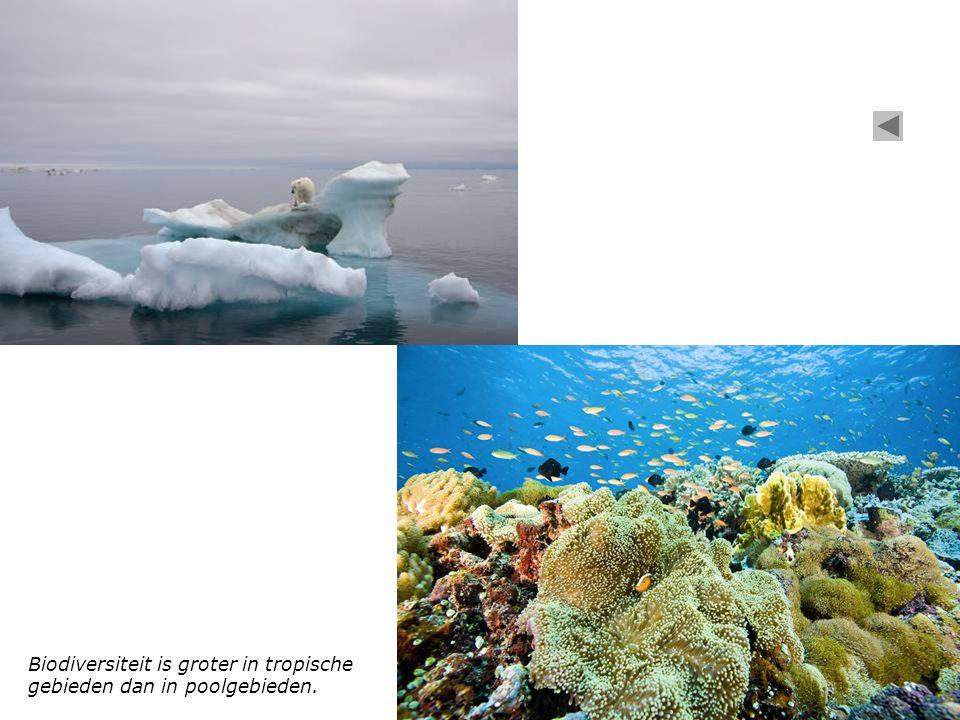 Biodiversiteit is groter in tropische gebieden dan in poolgebieden.