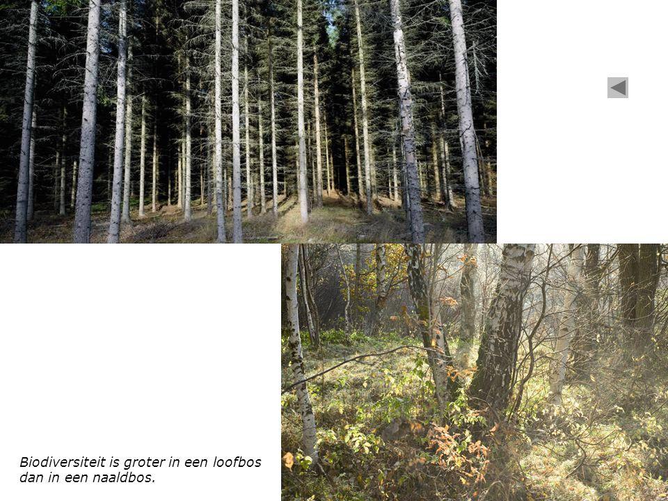 Biodiversiteit is groter in een hooiweide dan in een graasweide.