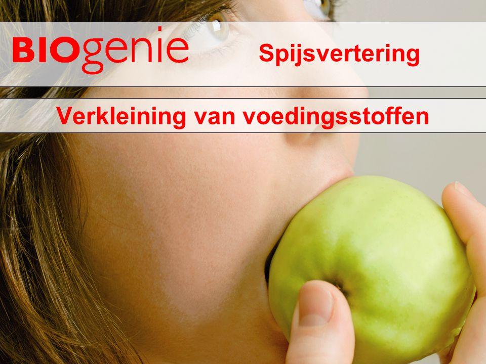 Spijsvertering Verkleining van voedingsstoffen