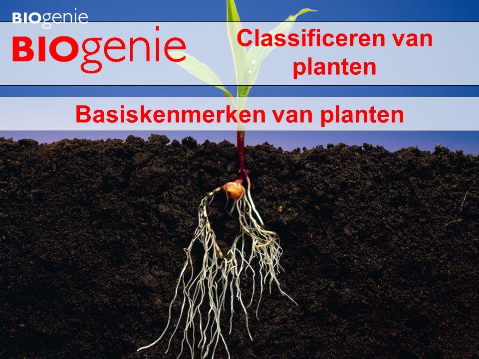 Hoe zijn planten microscopisch gebouwd.