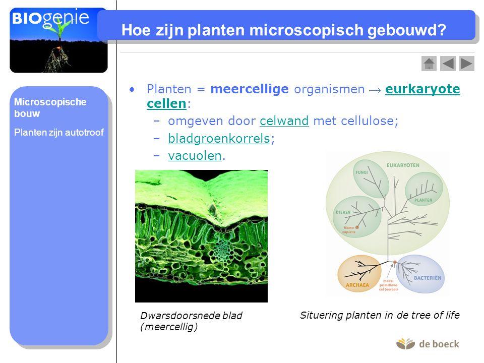 Hoe zijn planten microscopisch gebouwd? Planten = meercellige organismen  eurkaryote cellen:eurkaryote cellen –omgeven door celwand met cellulose;cel