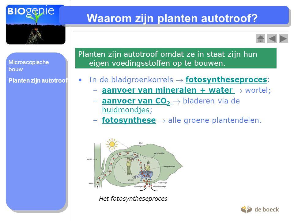 Waarom zijn planten autotroof? In de bladgroenkorrels  fotosyntheseproces:fotosyntheseproces –aanvoer van mineralen + water  wortel;aanvoer van mine