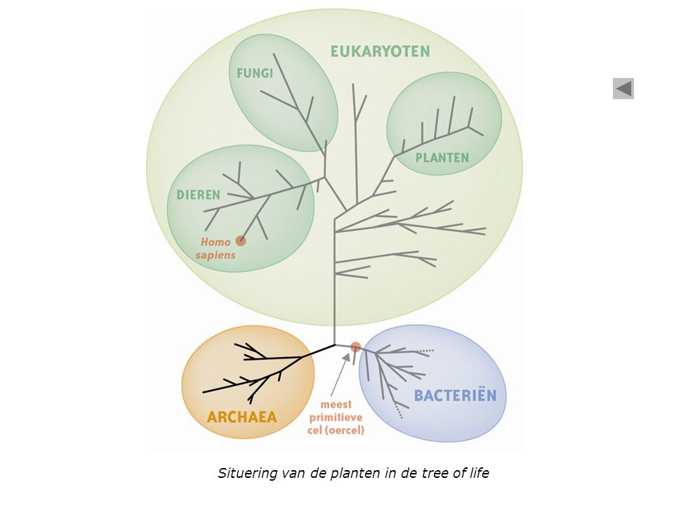 Transport van stoffen in de plant Fotosynthese in het blad Wortel Stengel