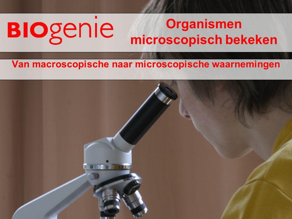 Organismen microscopisch bekeken Van macroscopische naar microscopische waarnemingen