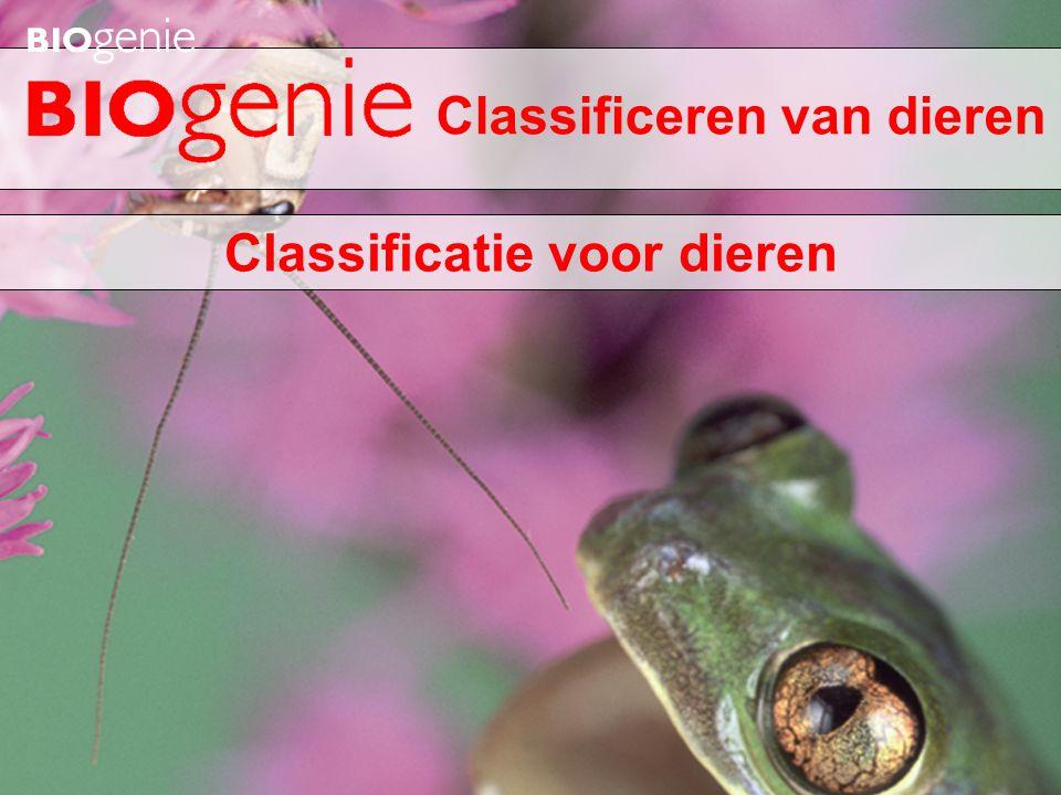 Inktvis bevat een inwendige schelp (inwendig skelet)