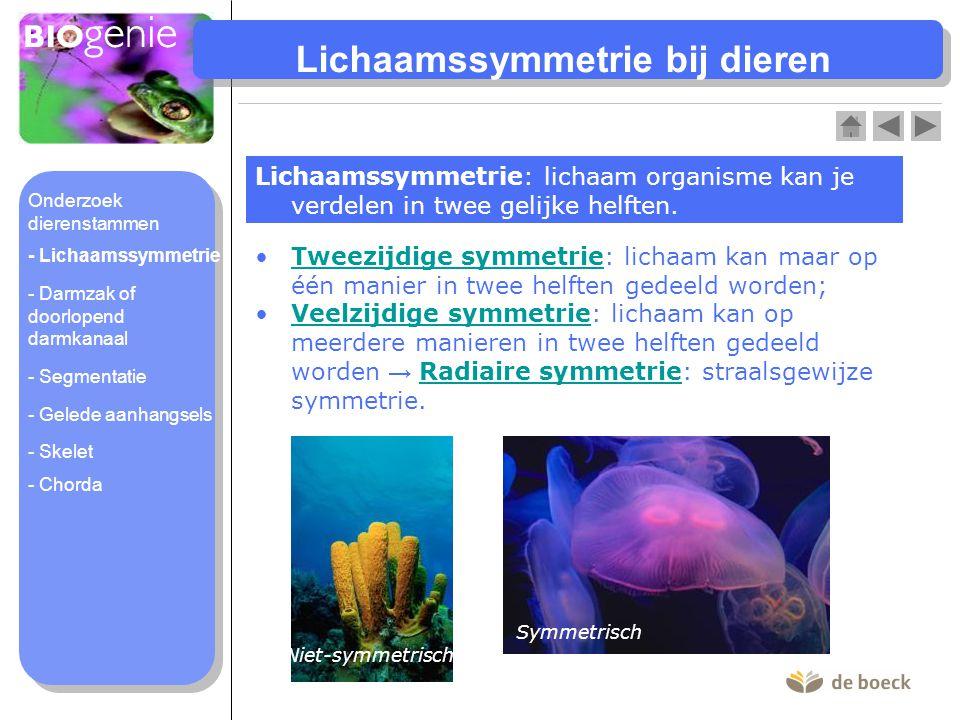 Lichaamssymmetrie bij dieren Lichaamssymmetrie: lichaam organisme kan je verdelen in twee gelijke helften. Tweezijdige symmetrie: lichaam kan maar op