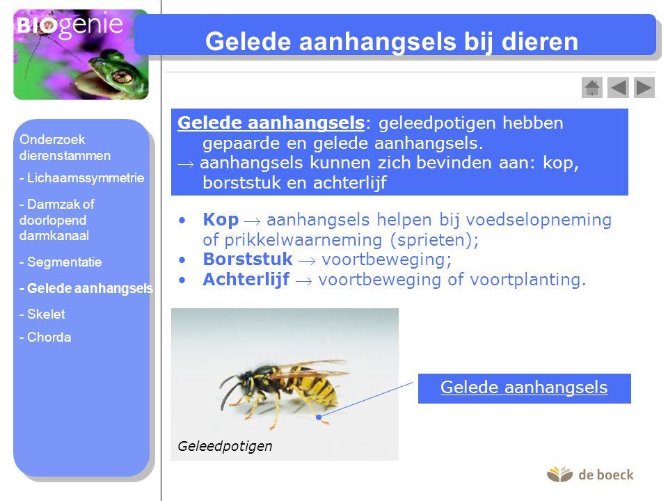 Gelede aanhangsels bij dieren Gelede aanhangsels: geleedpotigen hebben gepaarde en gelede aanhangsels.  aanhangsels kunnen zich bevinden aan: kop, bo