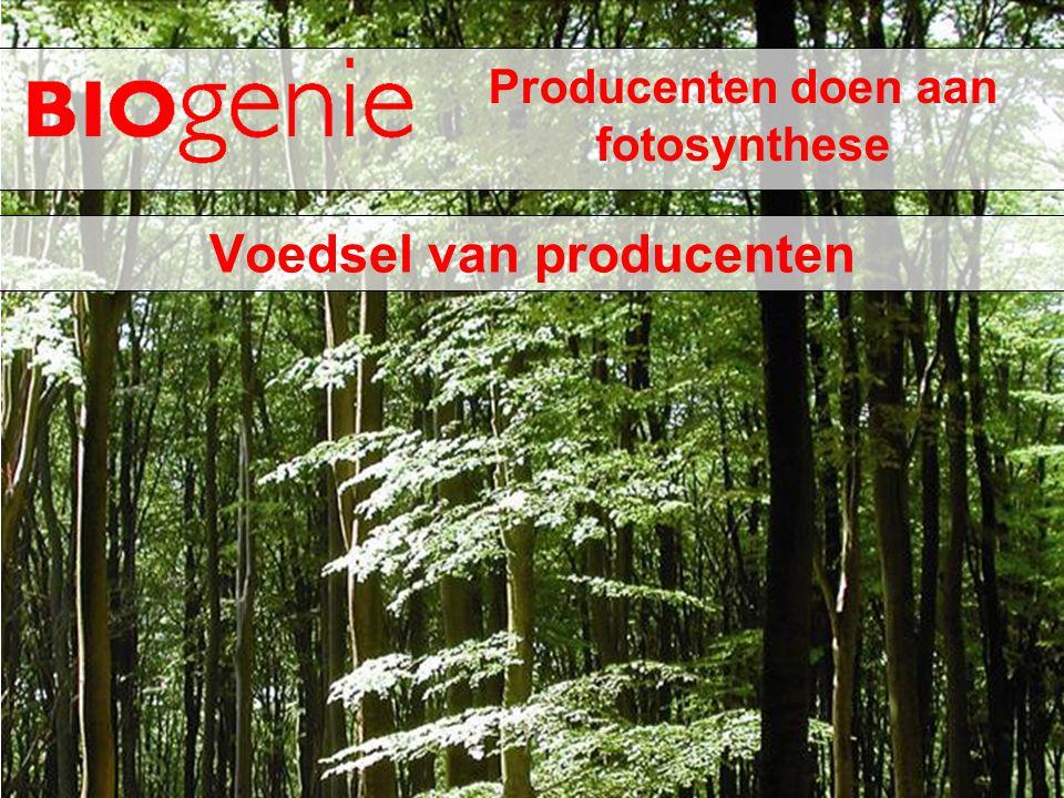 Producenten doen aan fotosynthese Voedsel van producenten