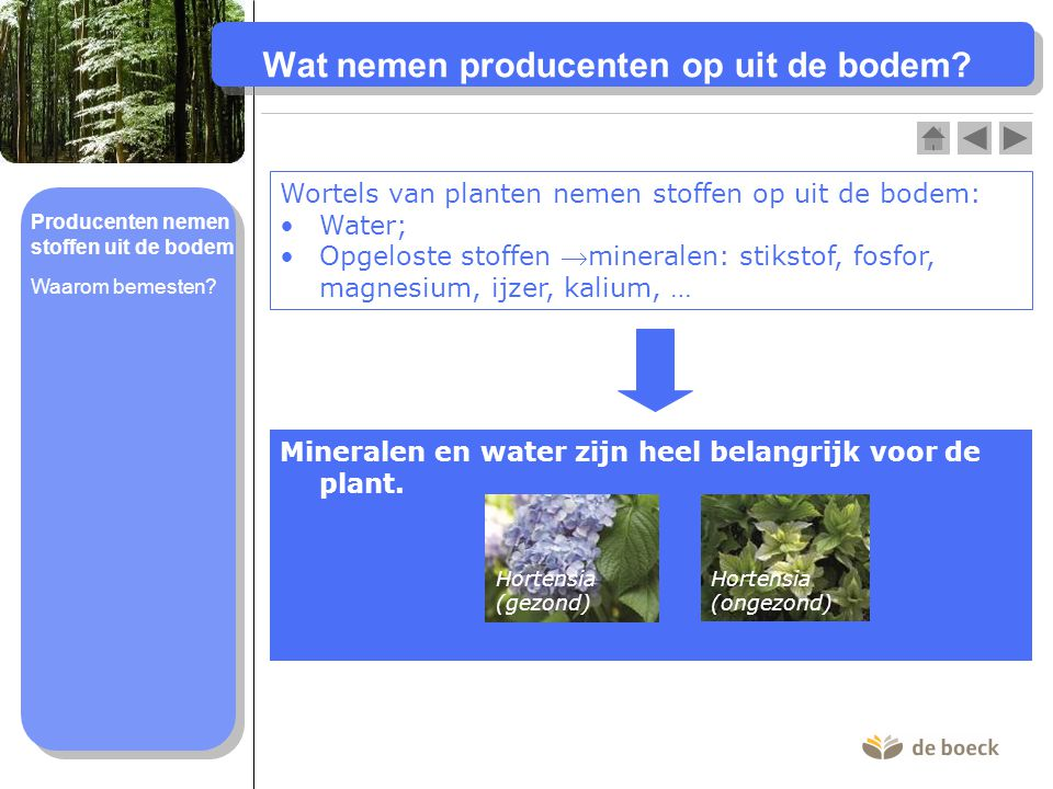 Producenten nemen stoffen uit de bodem Wat nemen producenten op uit de bodem? Wortels van planten nemen stoffen op uit de bodem: Water; Opgeloste stof