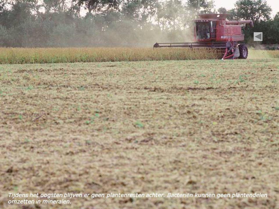Tijdens het oogsten blijven er geen plantenresten achter. Bacteriën kunnen geen plantendelen omzetten in mineralen.