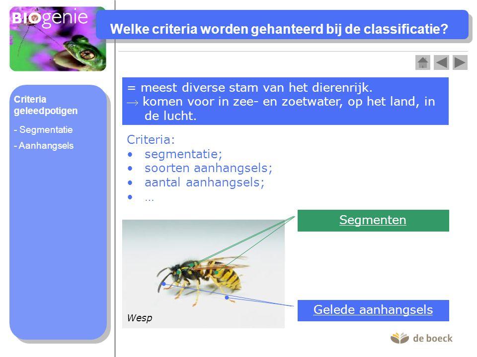 Welke criteria worden gehanteerd bij de classificatie? = meest diverse stam van het dierenrijk.  komen voor in zee- en zoetwater, op het land, in de