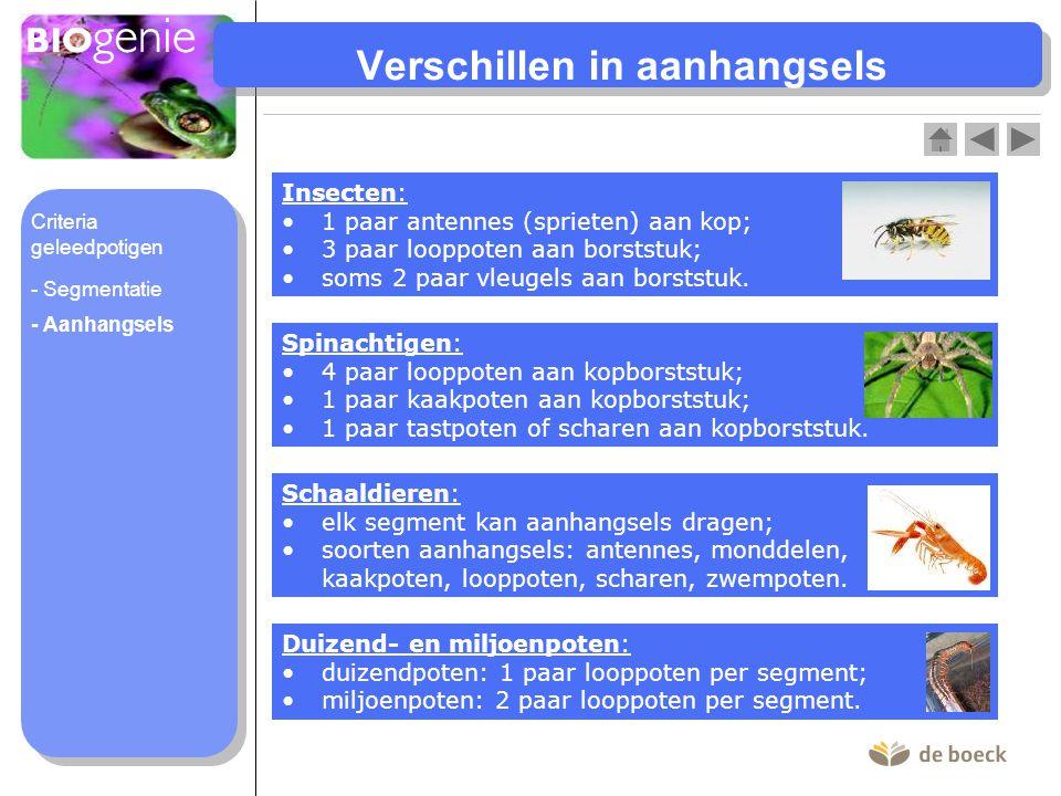 Verschillen in aanhangsels Insecten: 1 paar antennes (sprieten) aan kop; 3 paar looppoten aan borststuk; soms 2 paar vleugels aan borststuk. Spinachti
