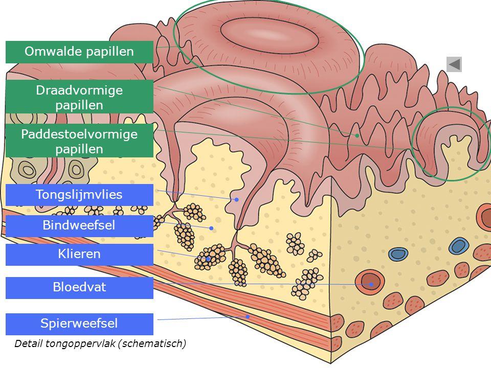 Zicht op tongslijmvlies met duizenden kleine uitsteeksels (smaakpapillen)