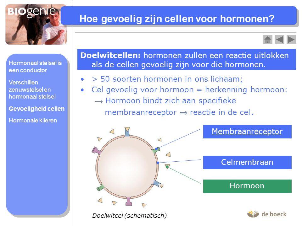Hoe gevoelig zijn cellen voor hormonen? Doelwitcellen: hormonen zullen een reactie uitlokken als de cellen gevoelig zijn voor die hormonen. > 50 soort