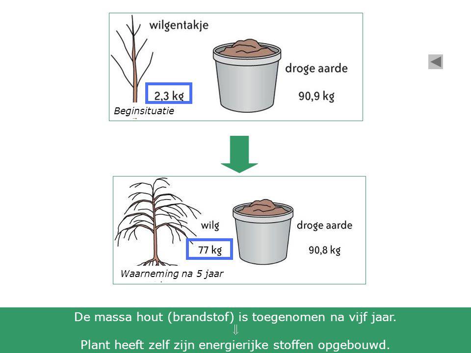 Waarneming na 5 jaar Beginsituatie De massa hout (brandstof) is toegenomen na vijf jaar.  Plant heeft zelf zijn energierijke stoffen opgebouwd.