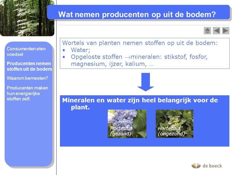 Wat nemen producenten op uit de bodem? Wortels van planten nemen stoffen op uit de bodem: Water; Opgeloste stoffen mineralen: stikstof, fosfor, magne