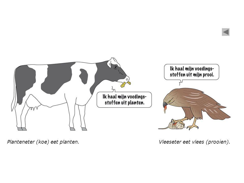 Planteneter (koe) eet planten.Vleeseter eet vlees (prooien).