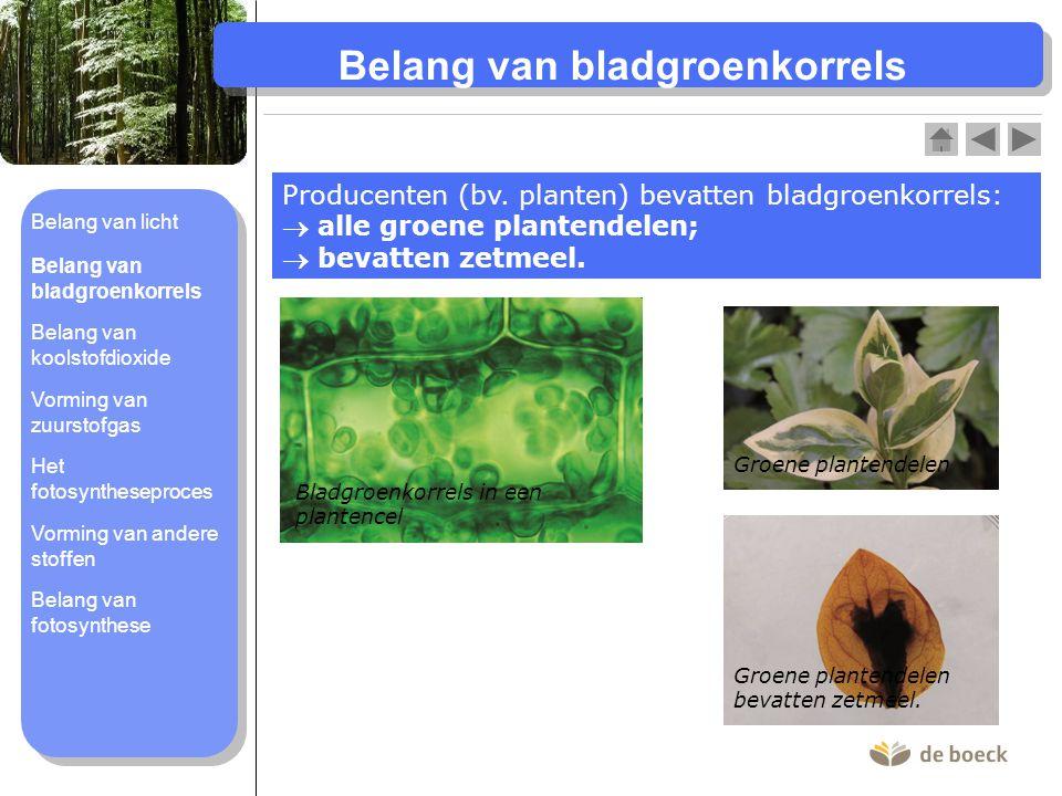 Belang van bladgroenkorrels Producenten (bv. planten) bevatten bladgroenkorrels:  alle groene plantendelen;  bevatten zetmeel. Bladgroenkorrels in e