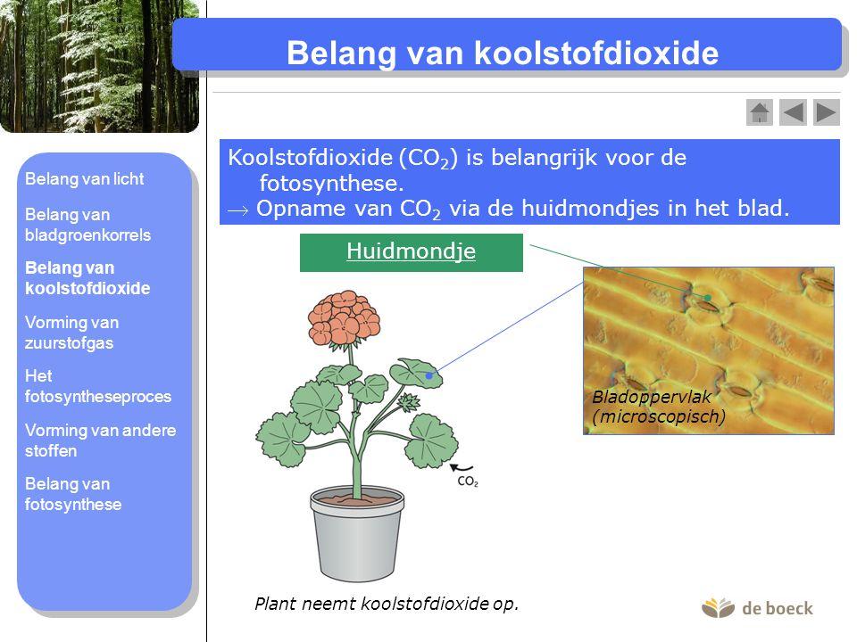 Belang van koolstofdioxide Koolstofdioxide (CO 2 ) is belangrijk voor de fotosynthese.  Opname van CO 2 via de huidmondjes in het blad. Bladoppervlak
