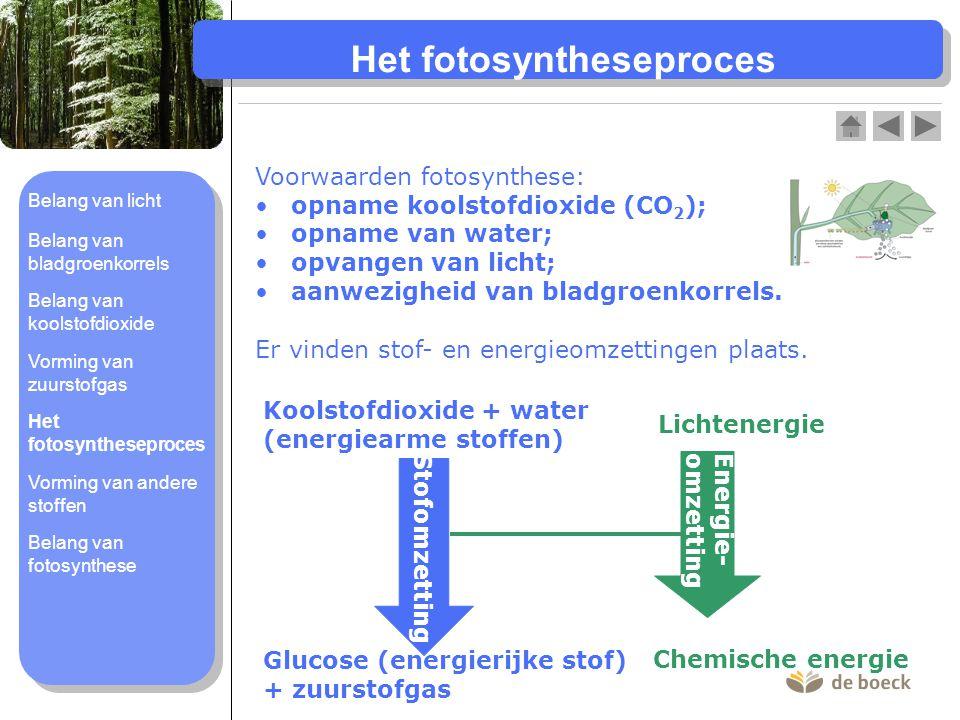 Het fotosyntheseproces Voorwaarden fotosynthese: opname koolstofdioxide (CO 2 ); opname van water; opvangen van licht; aanwezigheid van bladgroenkorre