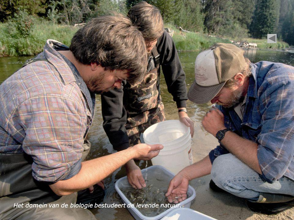 Het domein van de biologie bestudeert de levende natuur.