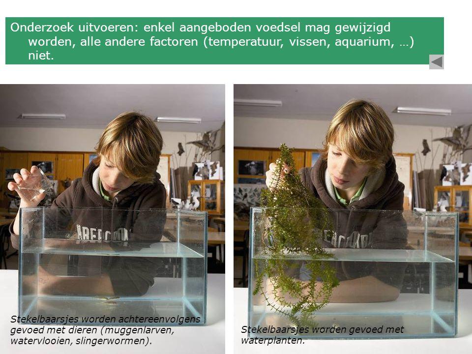 Onderzoek uitvoeren: enkel aangeboden voedsel mag gewijzigd worden, alle andere factoren (temperatuur, vissen, aquarium, …) niet. Stekelbaarsjes worde