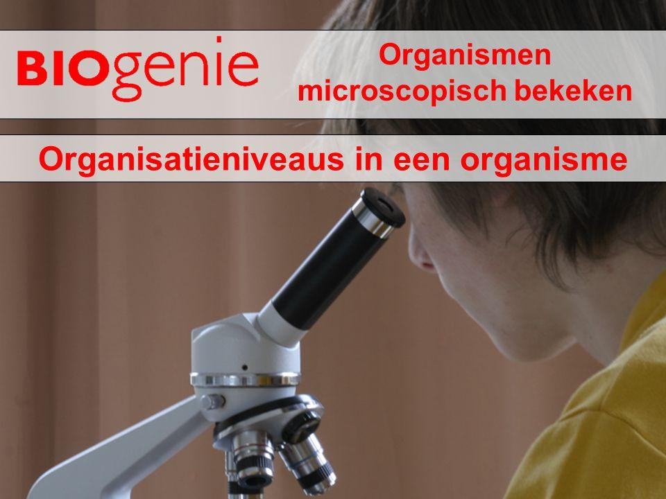 Organismen microscopisch bekeken Organisatieniveaus in een organisme