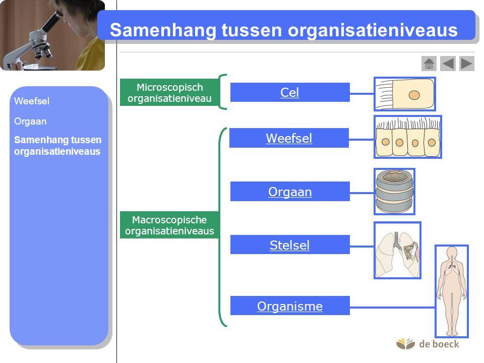 Samenhang tussen organisatieniveaus Cel Weefsel Orgaan Stelsel Organisme Microscopisch organisatieniveau Macroscopische organisatieniveaus Samenhang t