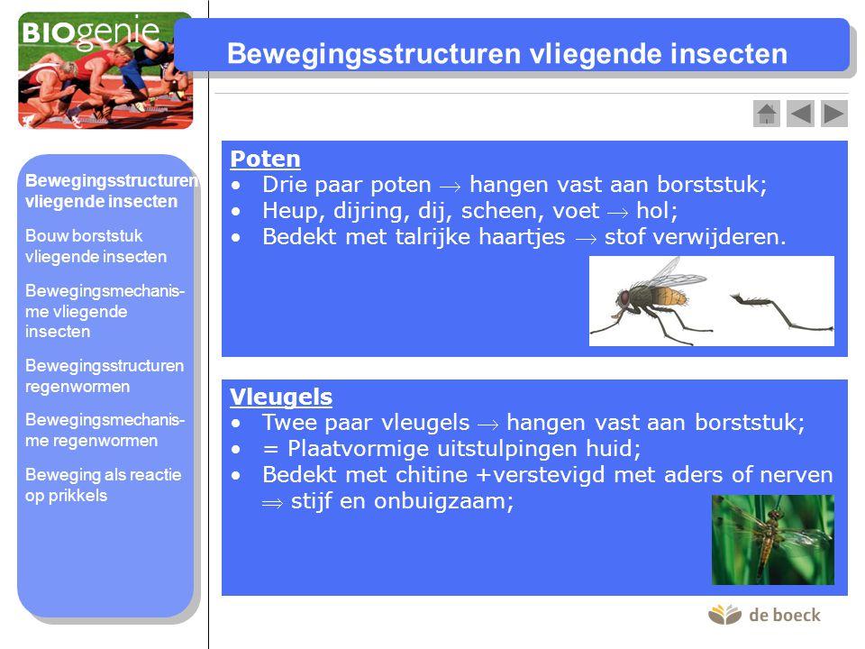 Bewegingsstructuren vliegende insecten Poten Drie paar poten  hangen vast aan borststuk;Drie paar poten  hangen vast aan borststuk; Heup, dijring, d