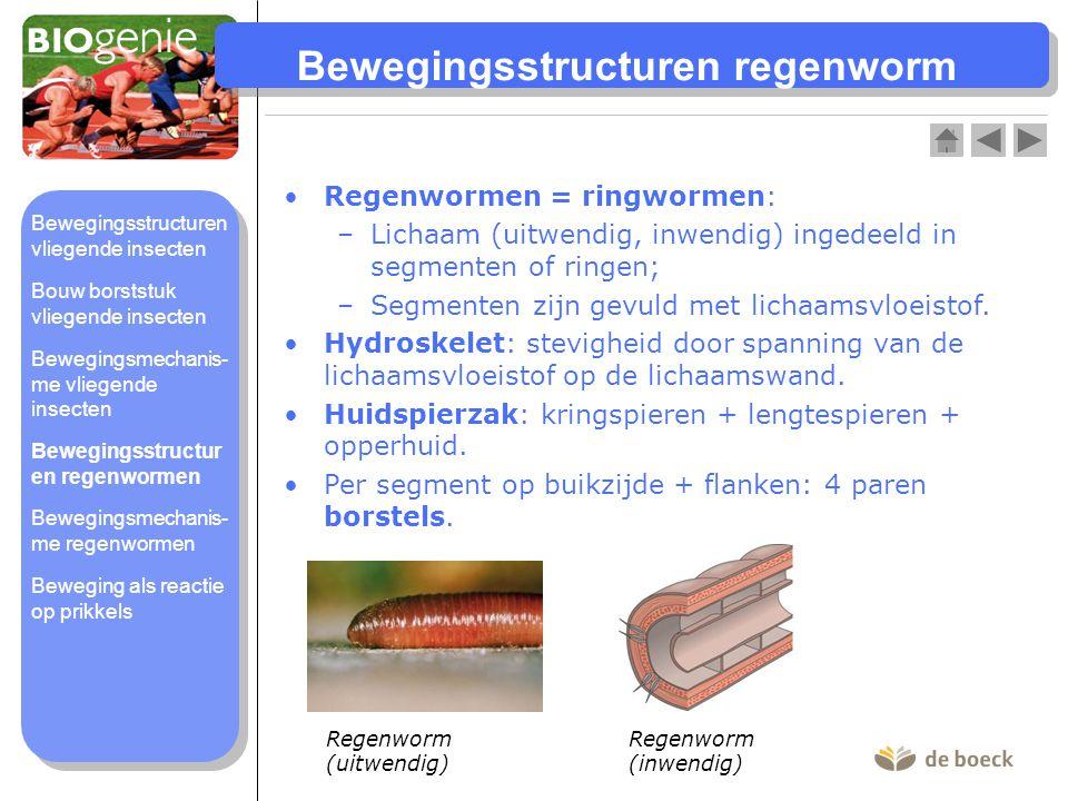 Bewegingsstructuren regenworm Regenwormen = ringwormen: –Lichaam (uitwendig, inwendig) ingedeeld in segmenten of ringen; –Segmenten zijn gevuld met li