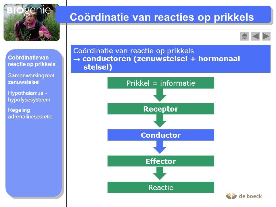 Coördinatie van reacties op prikkels Coördinatie van reactie op prikkels → conductoren (zenuwstelsel + hormonaal stelsel) Prikkel = informatie Recepto