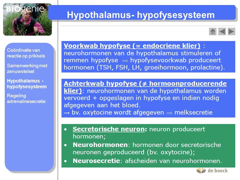 Hypothalamus- hypofysesysteem Voorkwab hypofyse (= endocriene klier) : neurohormonen van de hypothalamus stimuleren of remmen hypofyse  hypofysevoork