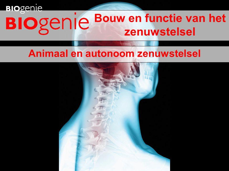 Animaal en autonoom zenuwstelsel Bouw en functie van het zenuwstelsel