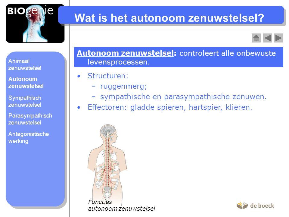 Wat is het autonoom zenuwstelsel? Autonoom zenuwstelsel: controleert alle onbewuste levensprocessen. Structuren: –ruggenmerg; –sympathische en parasym