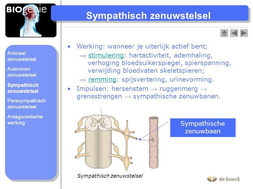 Parasympathisch zenuwstelsel Werking: brengt lichaam naar rusttoestand;  stimulering: spijsvertering, urinevorming;stimulering  remming: hartactiviteit, ademhaling, verlaging bloedsuikerspiegel, spierspanning, vernauwing bloedvaten skeletspieren.remming Impulsen: parasympathische zenuwbanen (zwervende zenuw uit de hersenstam + bekkenzenuw uit het ruggenmerg).