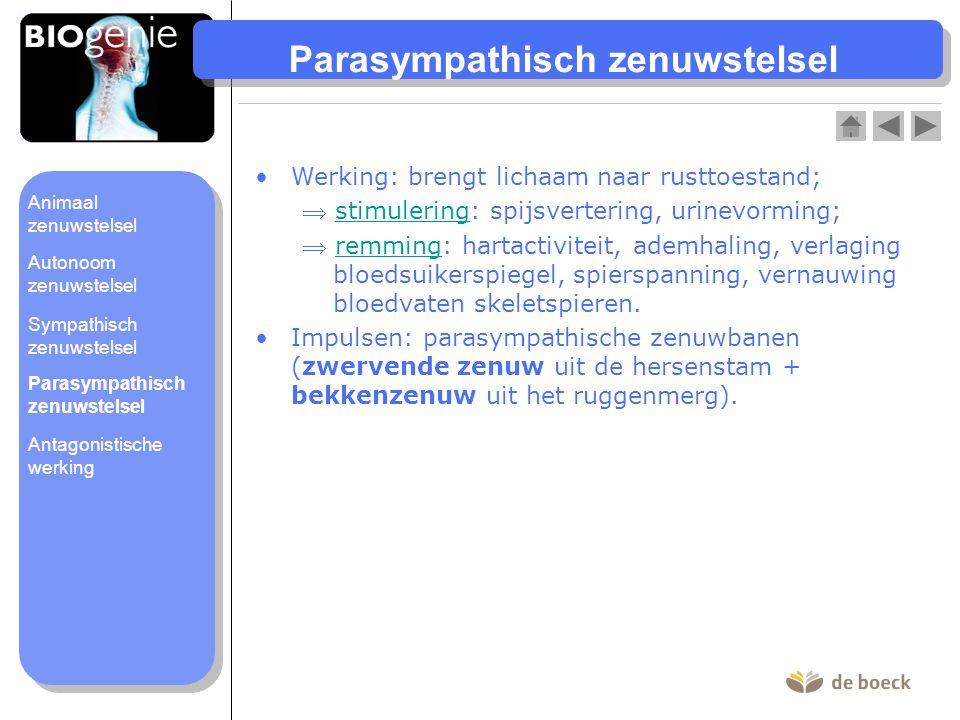Parasympathisch zenuwstelsel Werking: brengt lichaam naar rusttoestand;  stimulering: spijsvertering, urinevorming;stimulering  remming: hartactivit