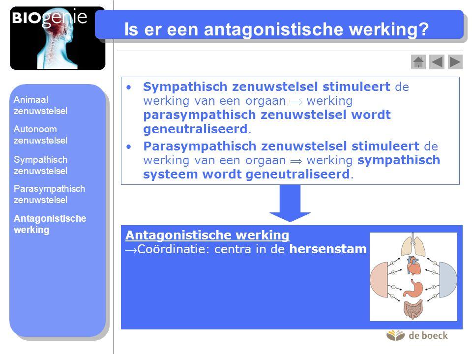 Is er een antagonistische werking? Sympathisch zenuwstelsel stimuleert de werking van een orgaan  werking parasympathisch zenuwstelsel wordt geneutra