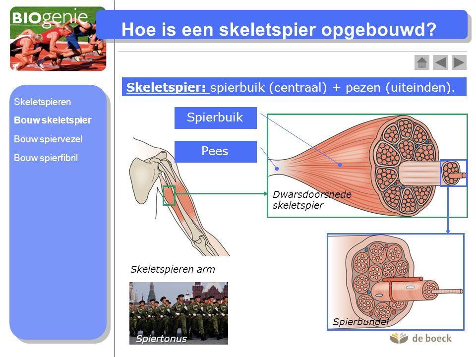 Spiertonus: spieren bevinden zich in een lichte, voortdurende contractietoestand.