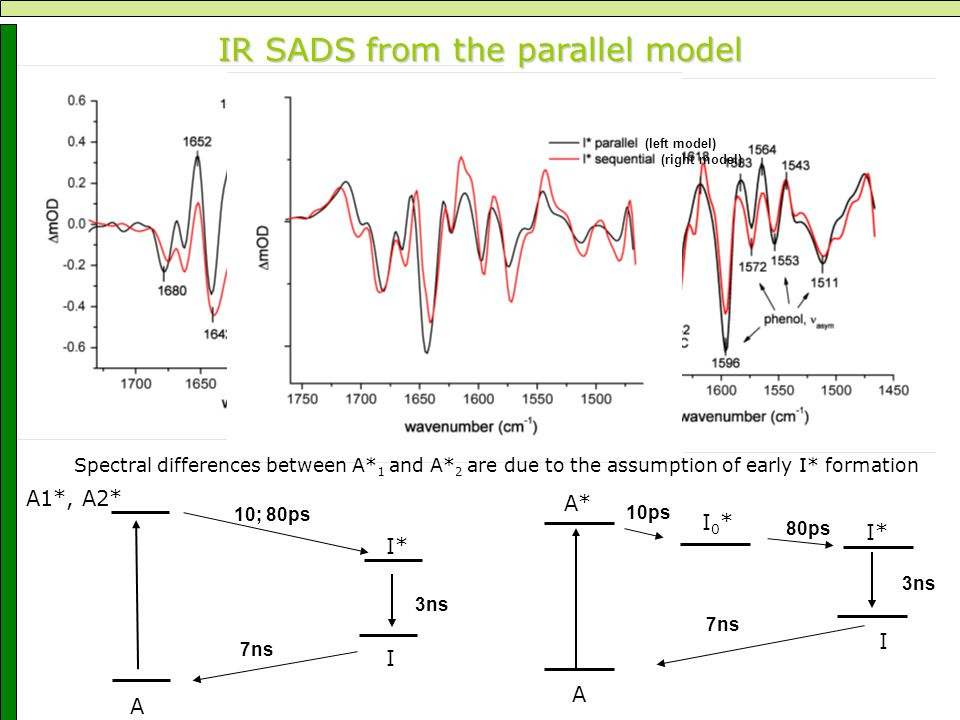 IR SADS from the parallel model A A1*, I* I A2* 10; 80ps 3ns 7ns A A* I* I I0*I0* 10ps 80ps 3ns 7ns (left model) (right model) Spectral differences be