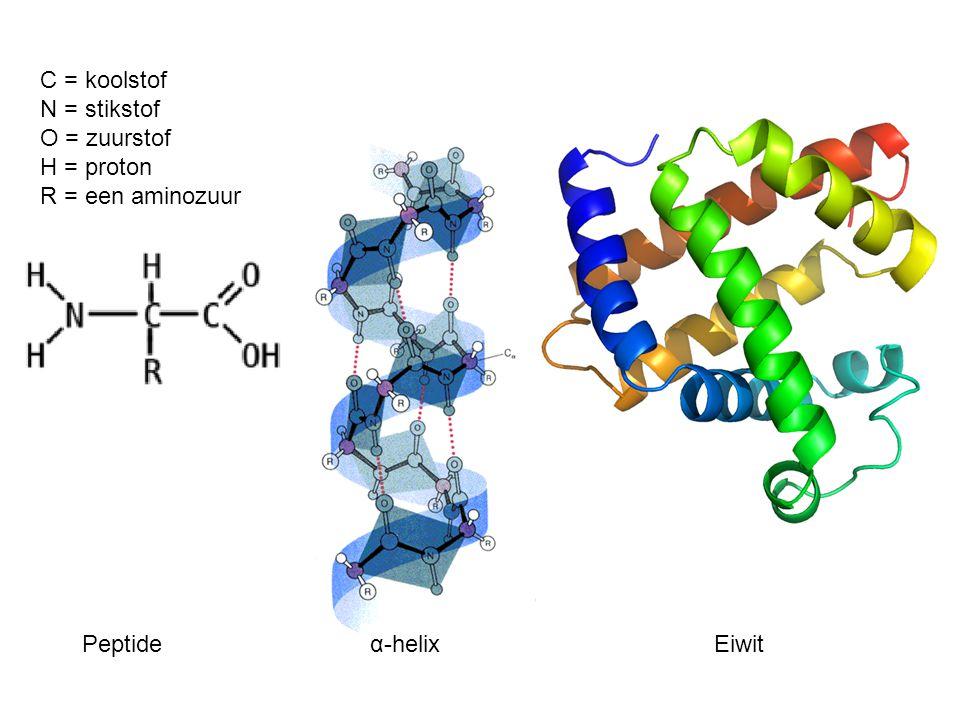 Peptideα-helixEiwit C = koolstof N = stikstof O = zuurstof H = proton R = een aminozuur