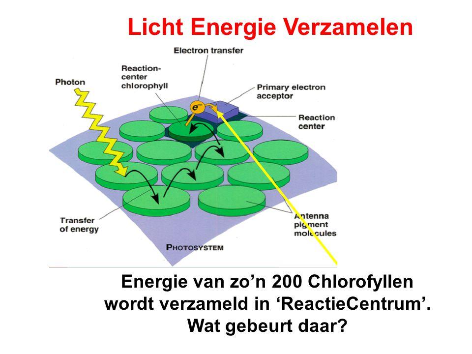 Energie van zo'n 200 Chlorofyllen wordt verzameld in 'ReactieCentrum'.